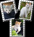 Cat 3 pictures