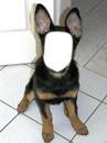 le visage du chien