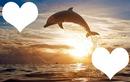 Coucher de soleil avec dauphin