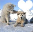 Chien des neiges love