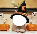 halloween animal