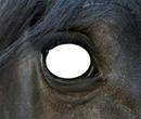 œil du cheval